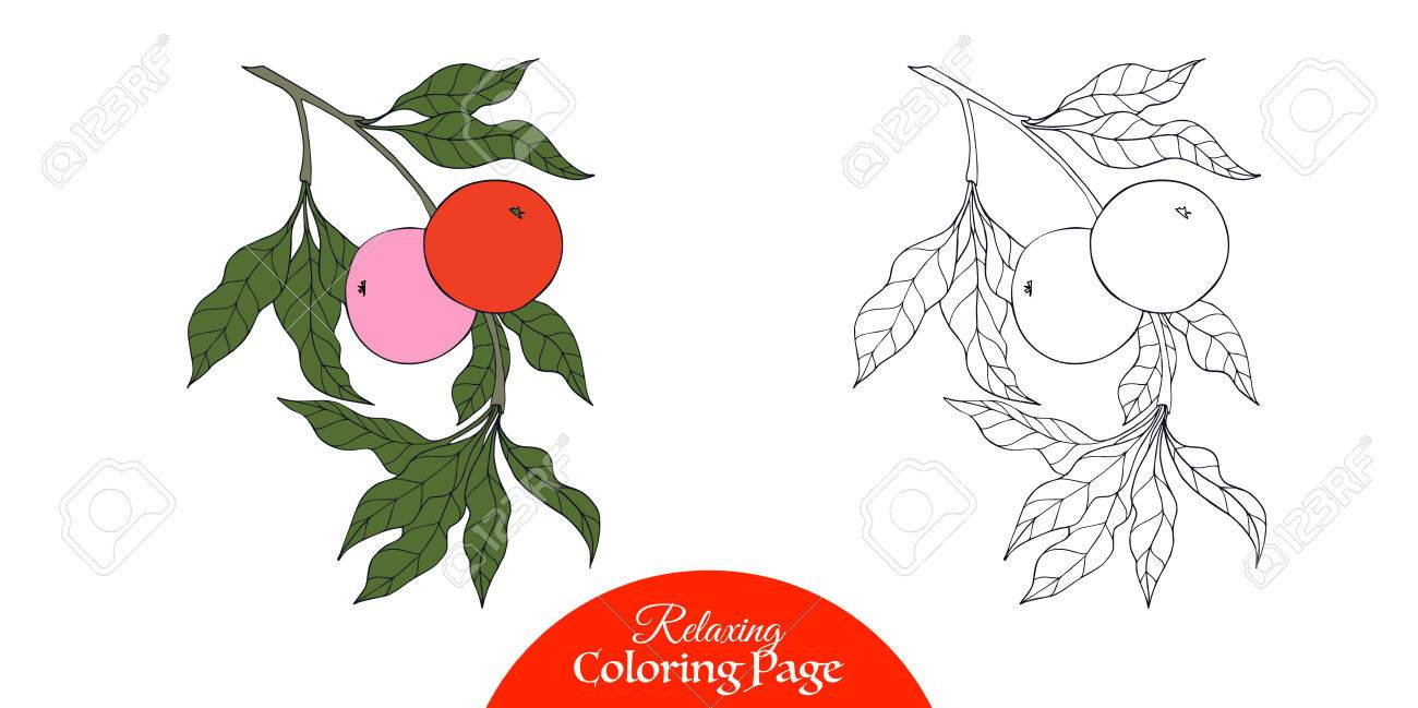 Outline Decorative Branch With Apple In Vintage Style Coloring Book For Adult And Older Children