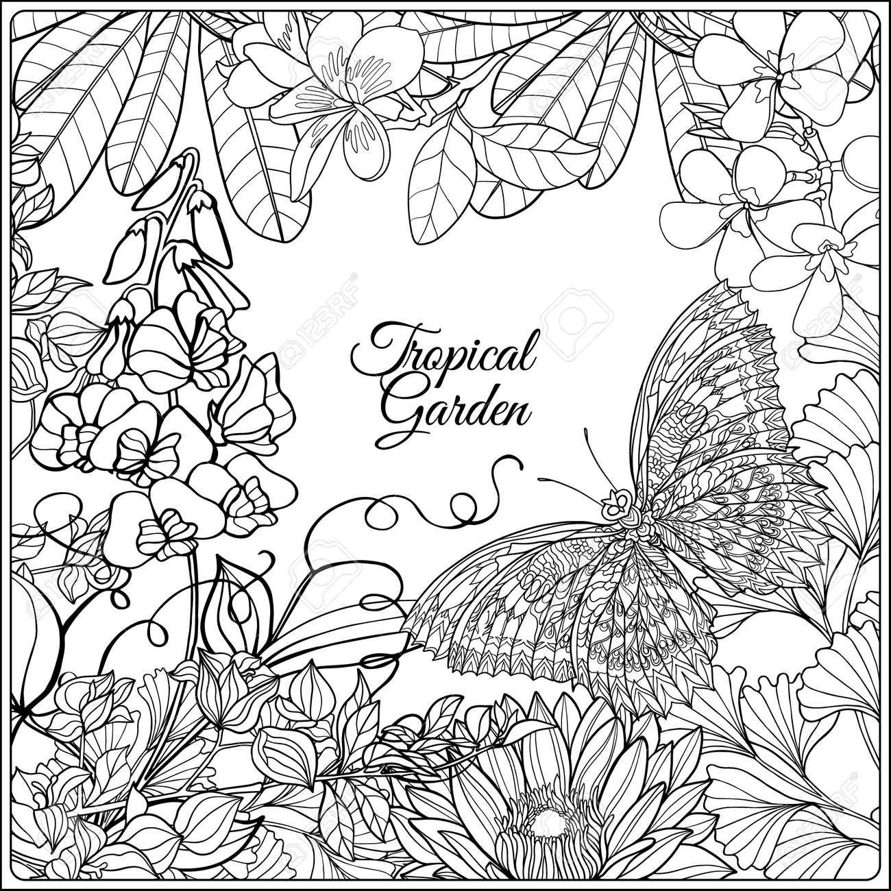 Pajaros Tropicales Y Flores Silvestres Y El Espacio Para El Texto