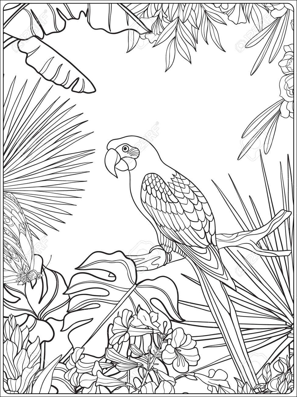 Pájaros Tropicales Y Plantas Silvestres Colección De Jardín Tropical Dibujo Para Colorear Libro De Colorante Para Los Adultos Y Niños Mayores