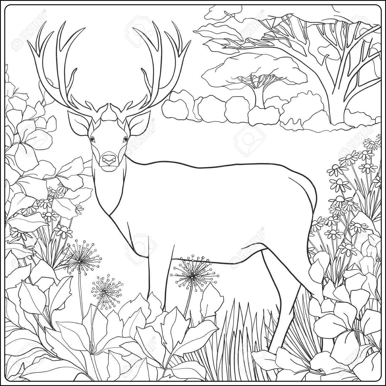 Delightful Coloring Page With Deer In Forest. Coloring Book For Adult And Older  Children. Vector