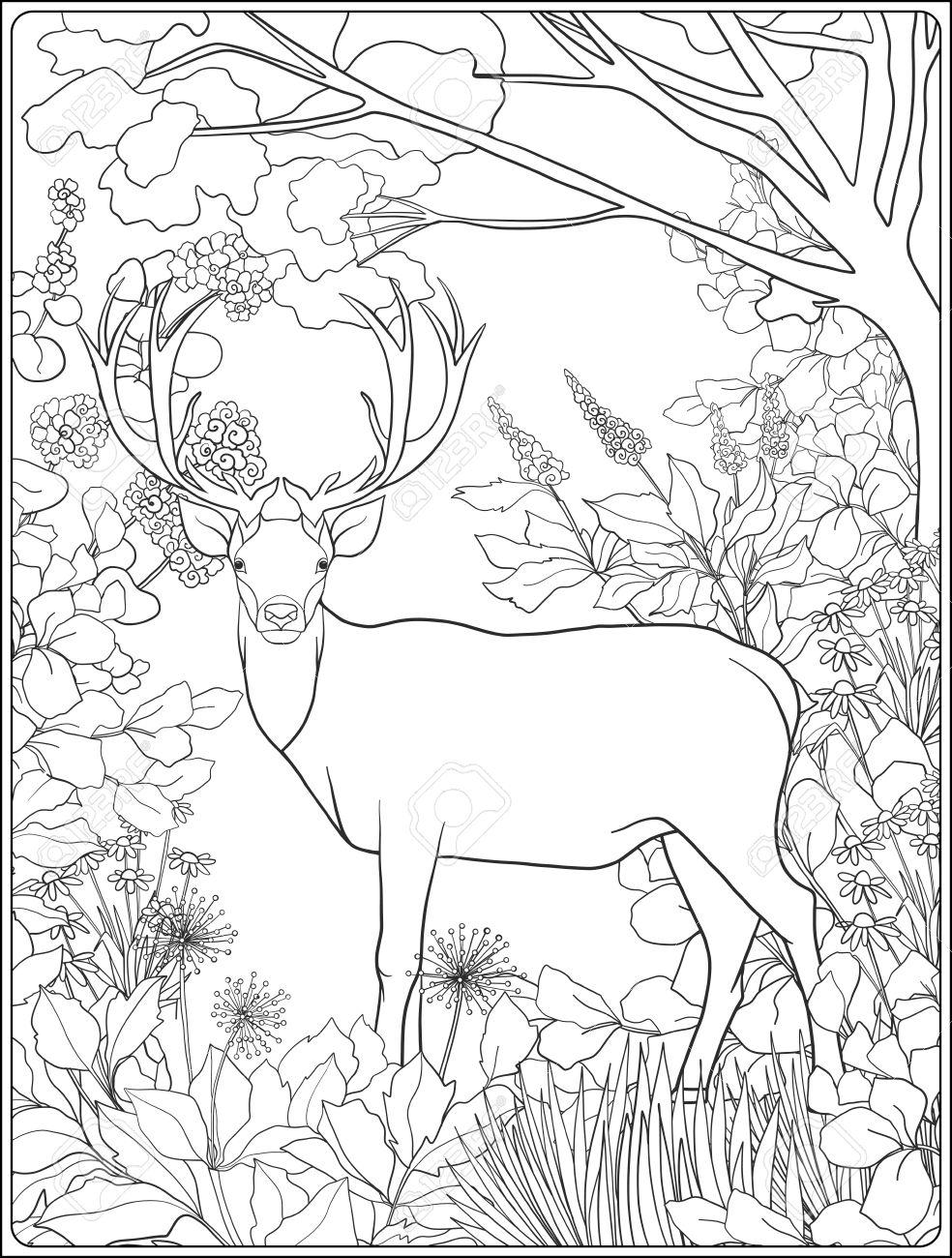 Moderno Colorear Ciervos Inspiración - Dibujos Para Colorear En ...