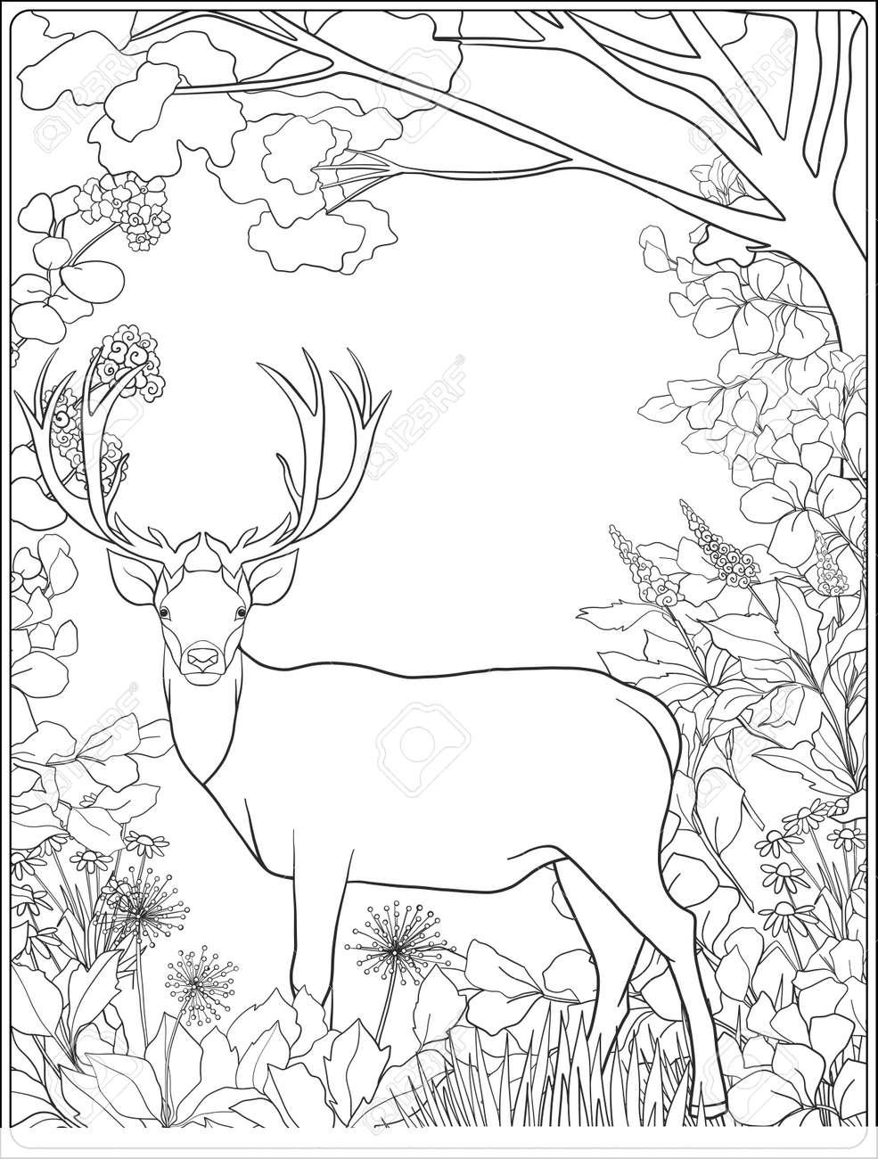 Coloriage Adulte Foret.Coloriage Avec Des Cerfs Dans La Foret Livre A Colorier Pour Les Adultes Et Les Enfants Plus Ages Vector Illustration Dessin Au Trait