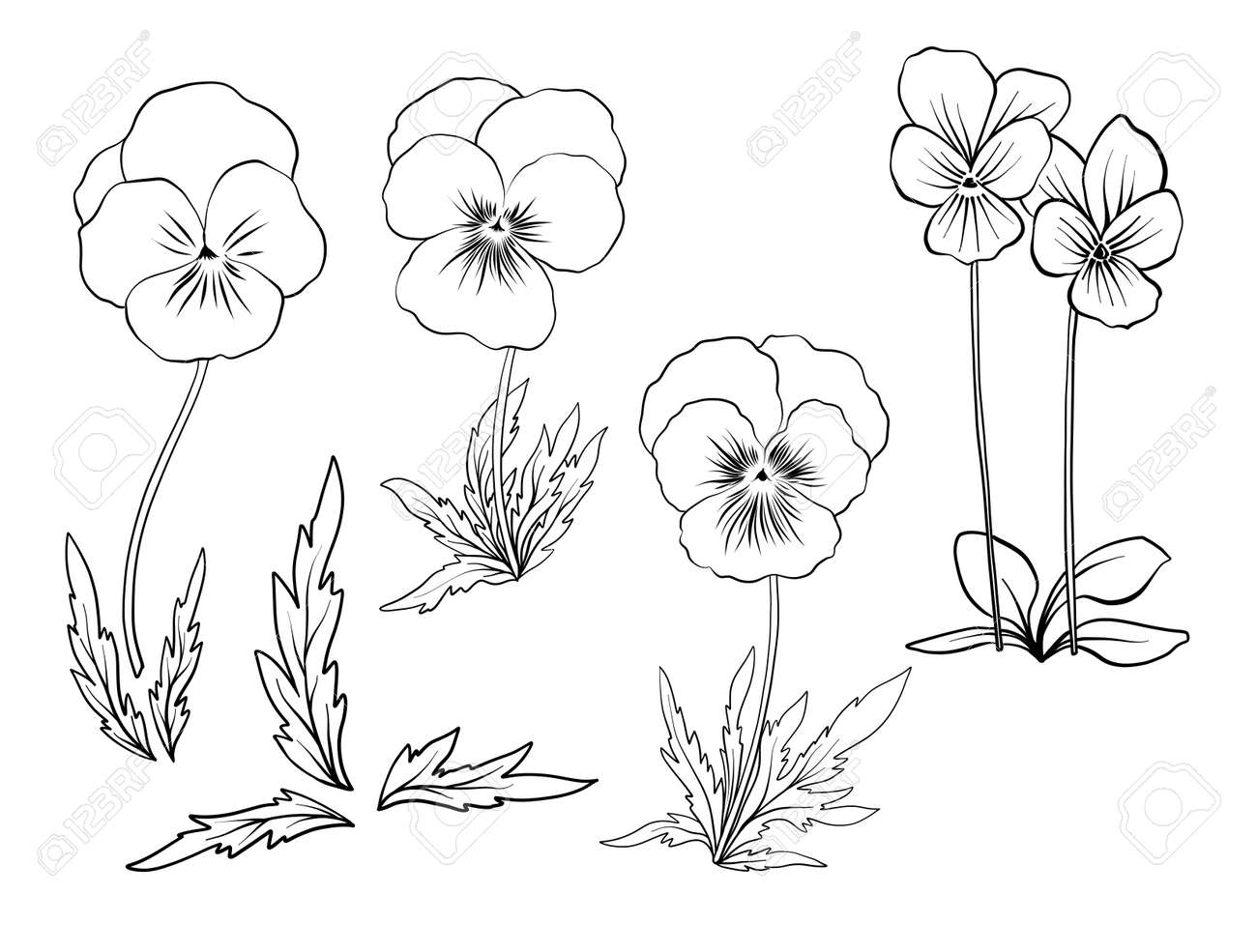 Violet Flowers Set Of Outline Flowers Royalty Free Cliparts Vectors And Stock Illustration Image 80628281