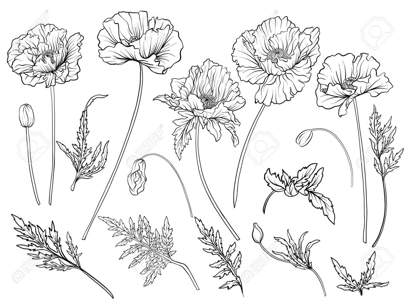 Poppy flowers. Set of outline flowers. - 80628332