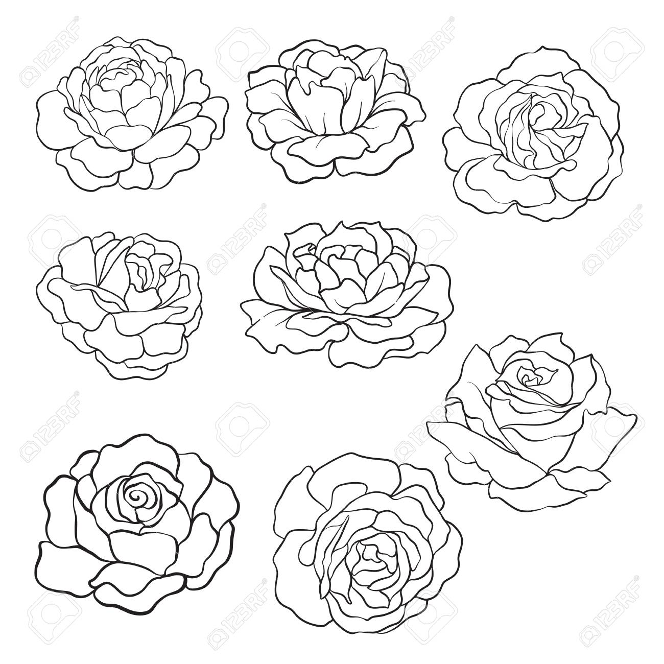 Set of isolated rose outline drawing stock line vector illustration stock vector