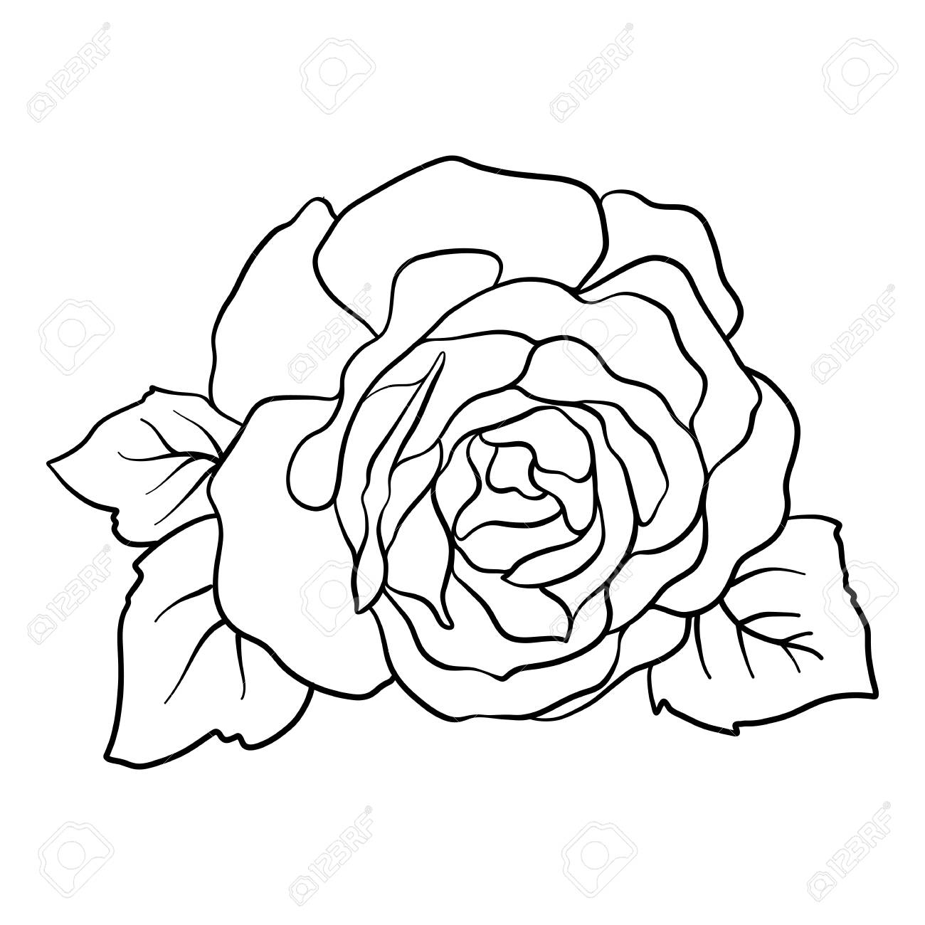 Isolated rose outline drawing stock vector illustration stock vector 85725732