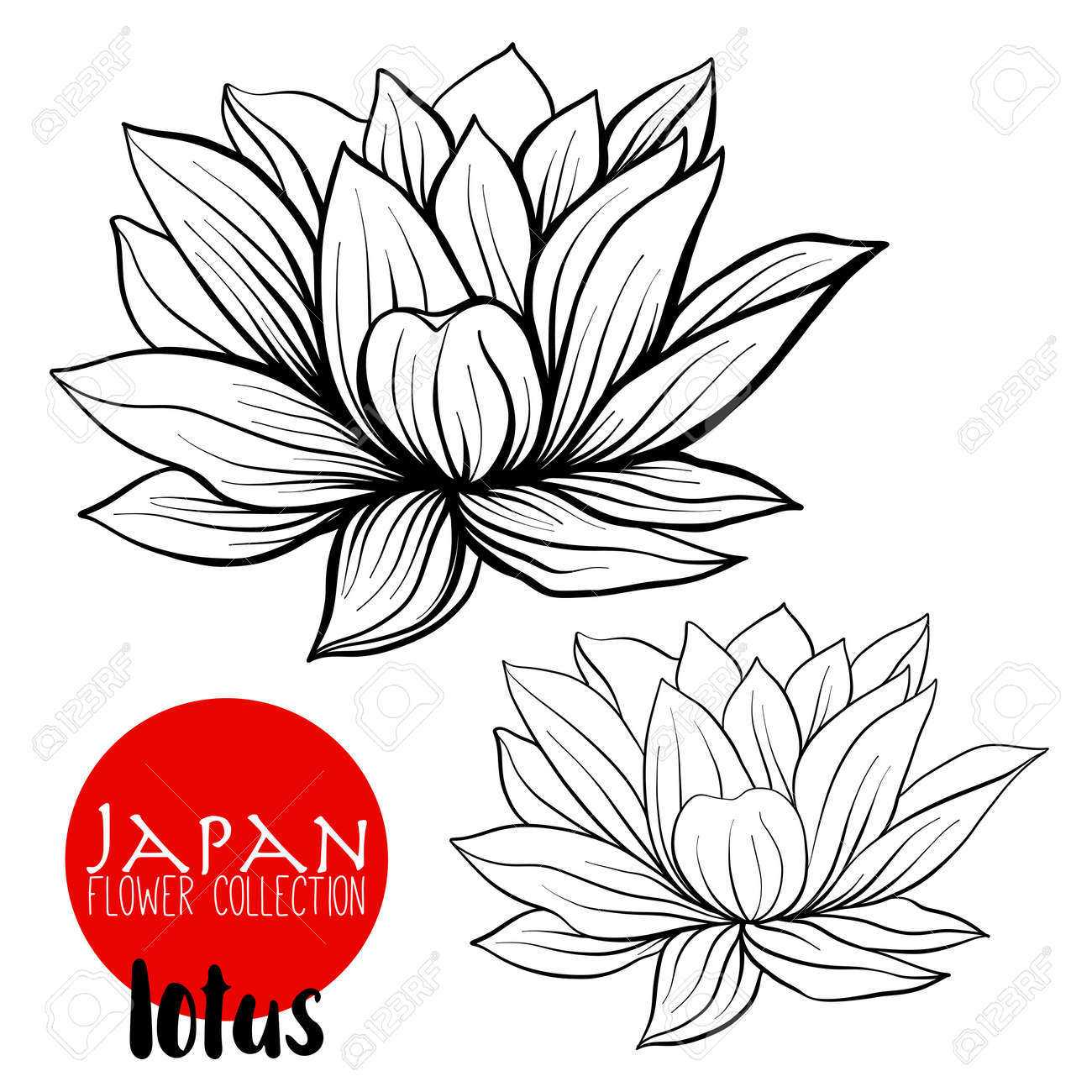 Lotus flowers stock line vector illustration botanic flowers lotus flowers stock line vector illustration botanic flowers outline drawing stock vector mightylinksfo