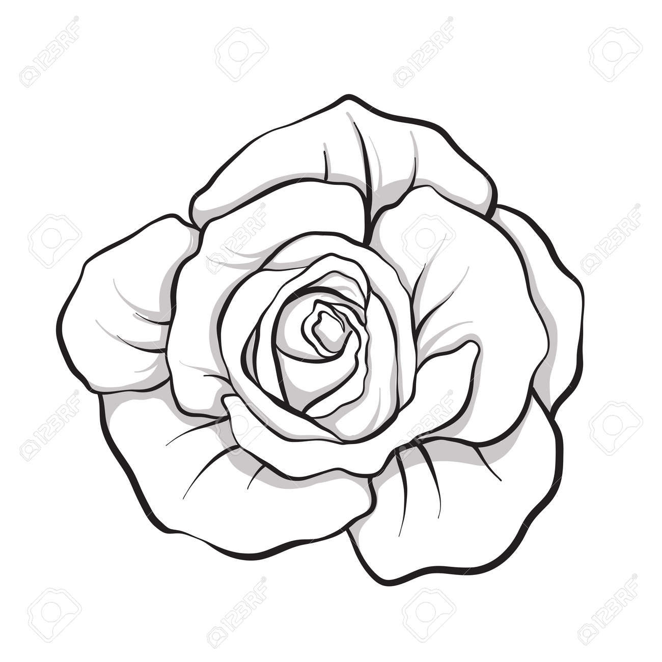 Rose Flower Isolated Outline Hand Drawn Stock Line Vector