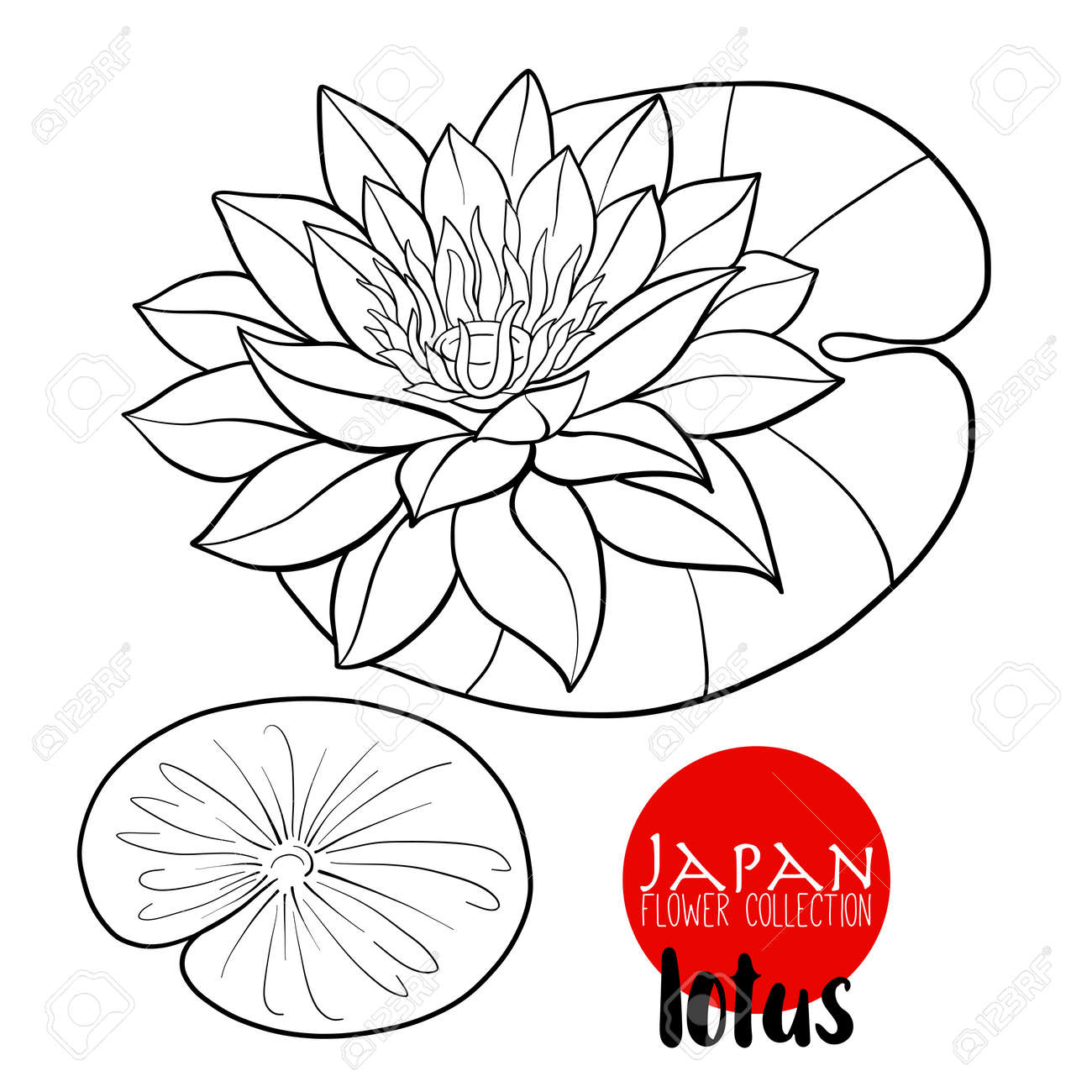 Lotus flowers stock line vector illustration botanic flowers outline drawing stock vector