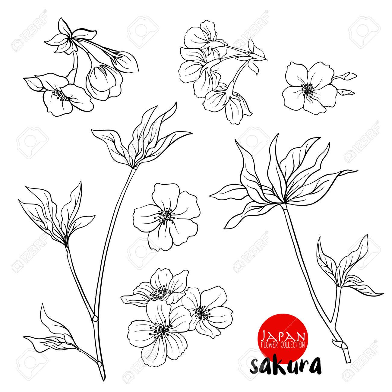 Rama De Flores De Cerezo Cereza Japonesa Stock Vector Ilustración