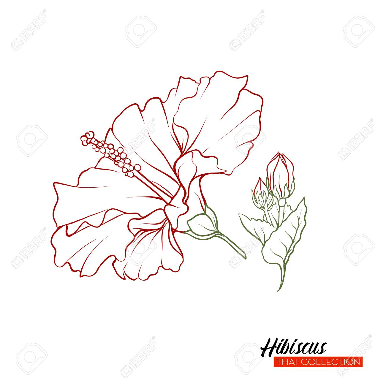Hibiscus Flower Botanical Illustration Style Stock Vector Outline Royalty Free Cliparts Vectors And Stock Illustration Image 111753932