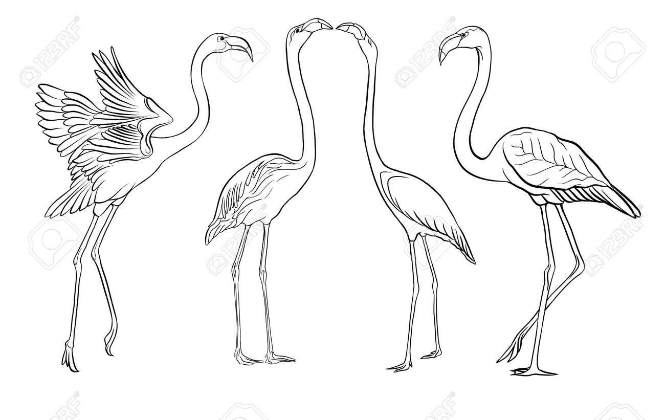 Beautiful hand drawn outline vector illustration with flamingo. Isolated on white background. - 106868713