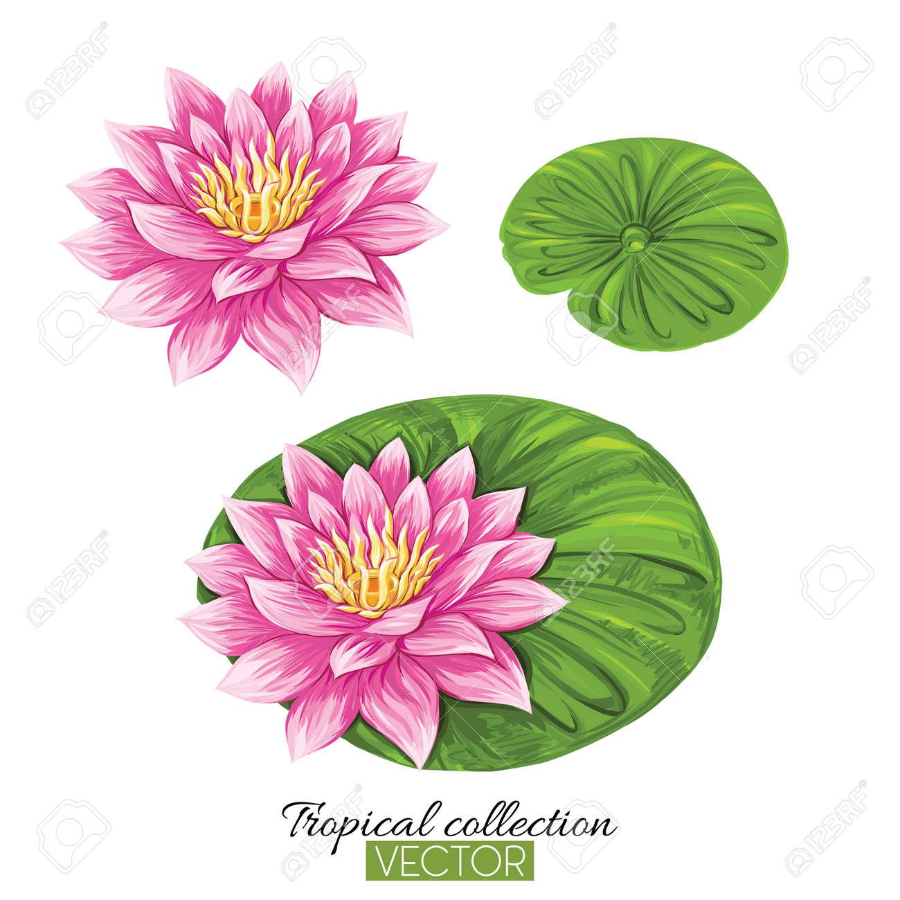 Beautiful hand drawn botanical vector illustration with lotus fl - 106918401