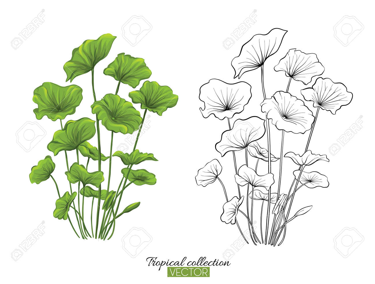 Tropical plant collection vector illustration isolated on white - 106918413