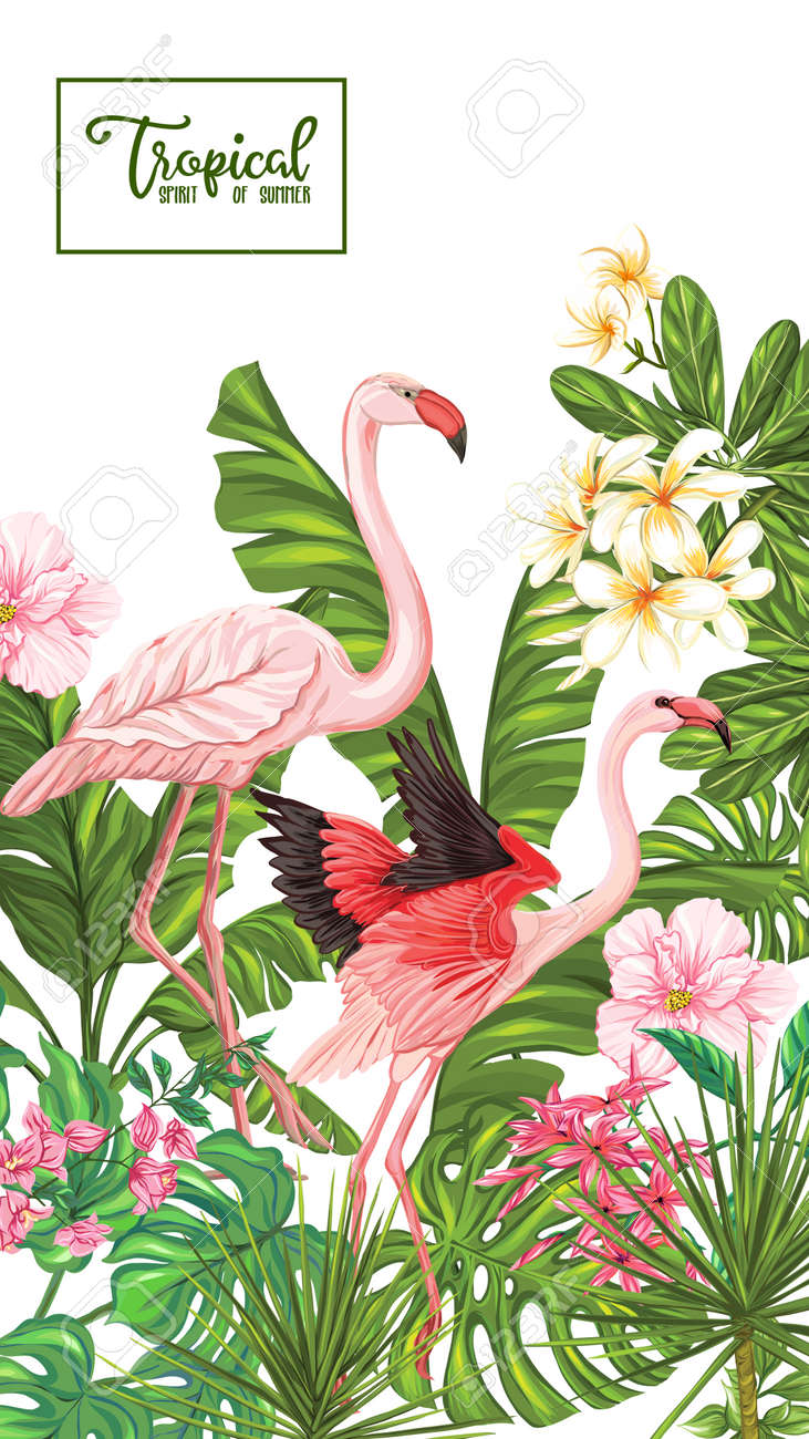 Template of poster, banner, postcard with tropical flowers and plants and flamingo bird on white background. Stock vector illustration. - 108021036