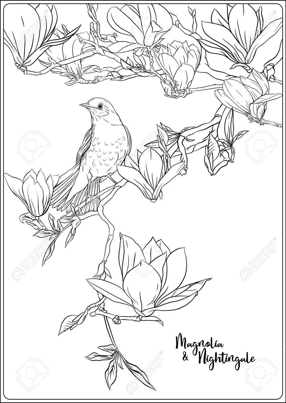 Southern Magnolia Tree coloring page | Free Printable Coloring Pages | 1300x920