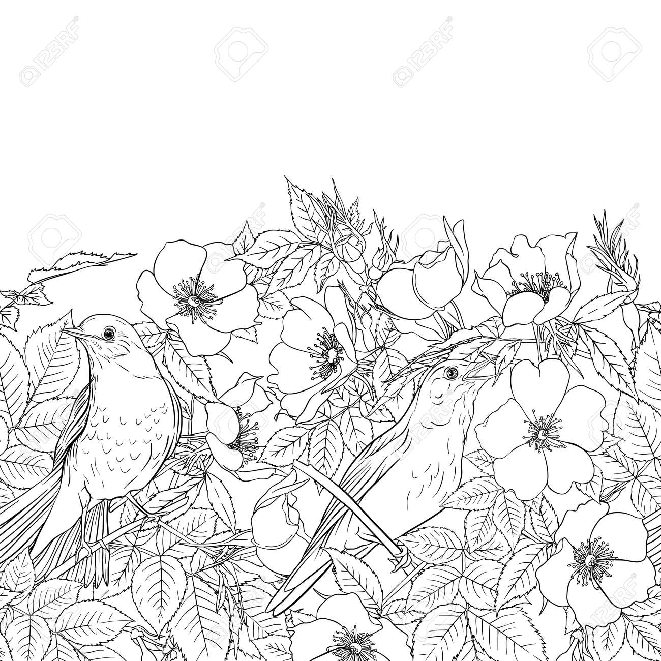 Seamless pattern, background with dog-rose, briar, brier, eglantine, canker-rose . Template for wedding invitation, greeting card, gift voucher. Graphic outline drawing, Vector illustration. - 134179016