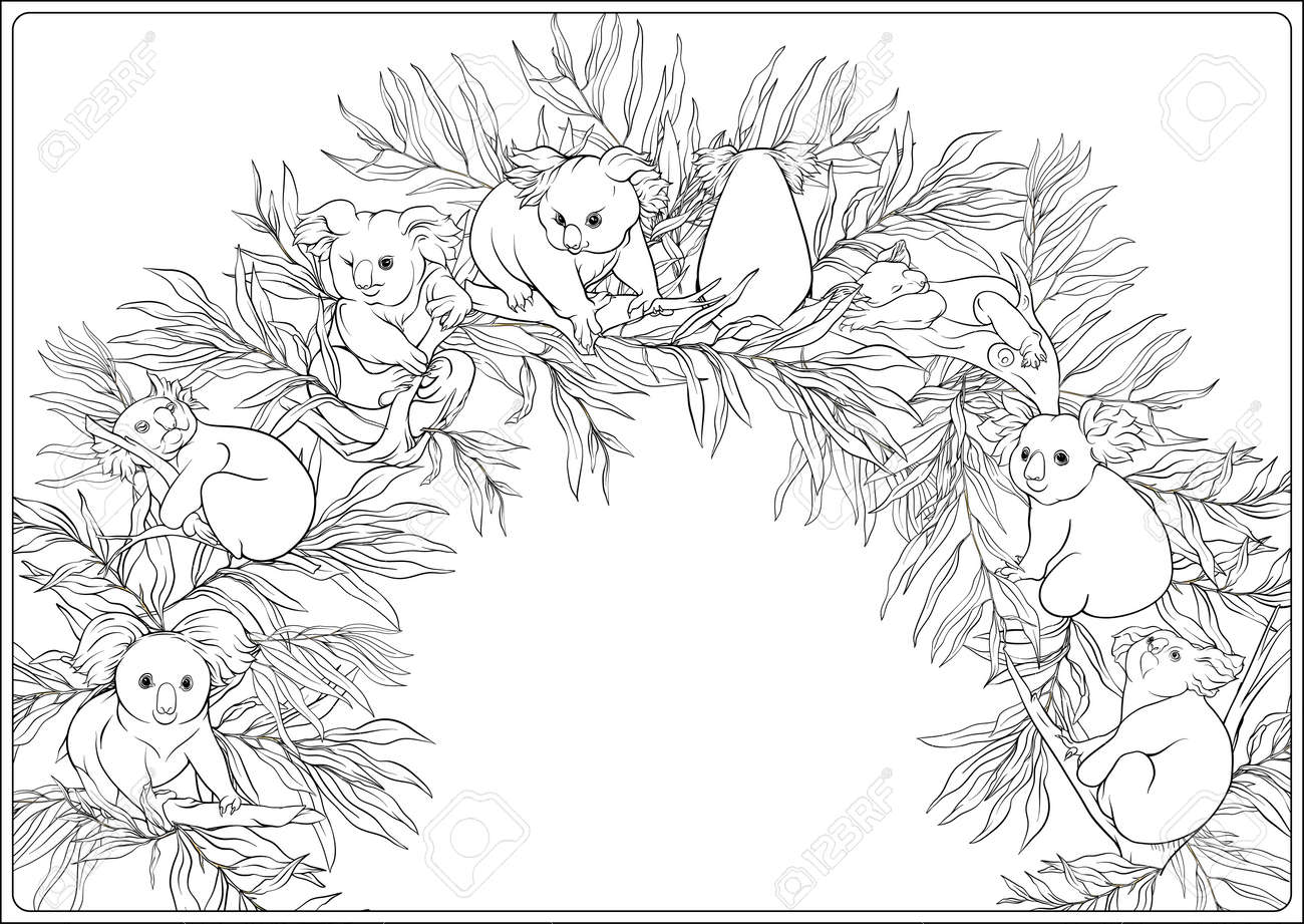 Koala and eucalyptus. Coloring page for the adult coloring book. Outline hand drawing vector illustration.. - 147324822