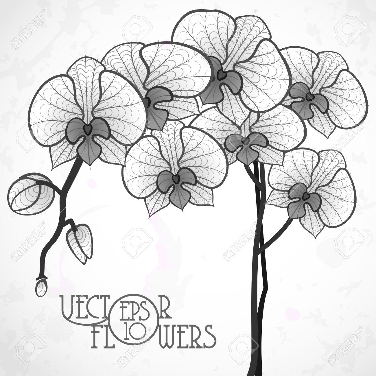Dessin Fleur D Orchidée dessin à la main fleur d'orchidée clip art libres de droits