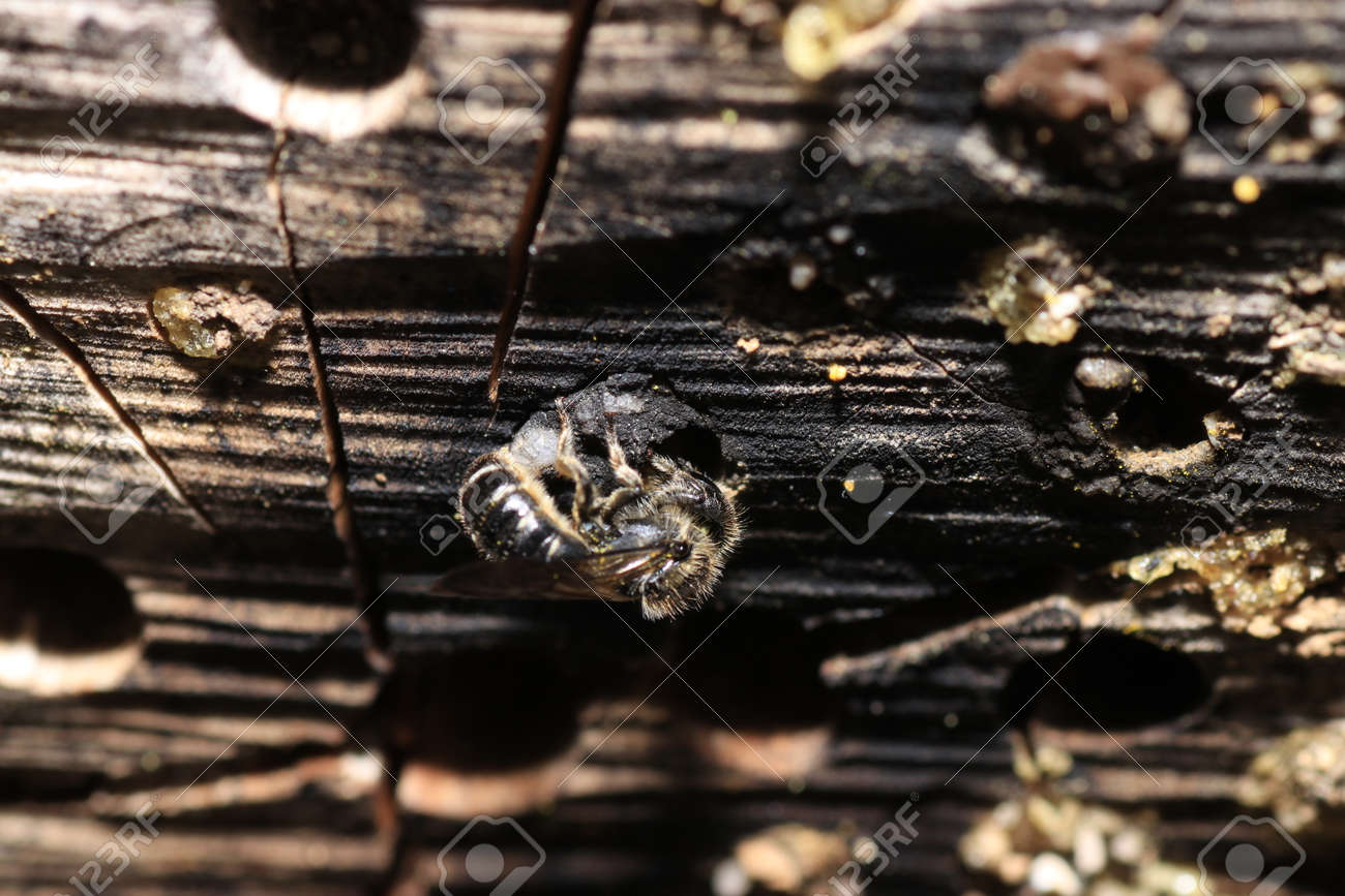 An insect hotel can be easily made from a variety of materials and is very good at watching the insects - 139079952