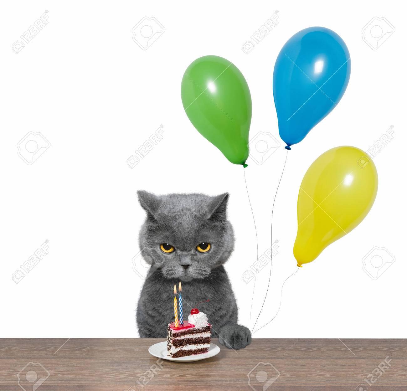 Kat Verjaardag Vieren Met Een Stuk Taart En Ballonnen Geisoleerd