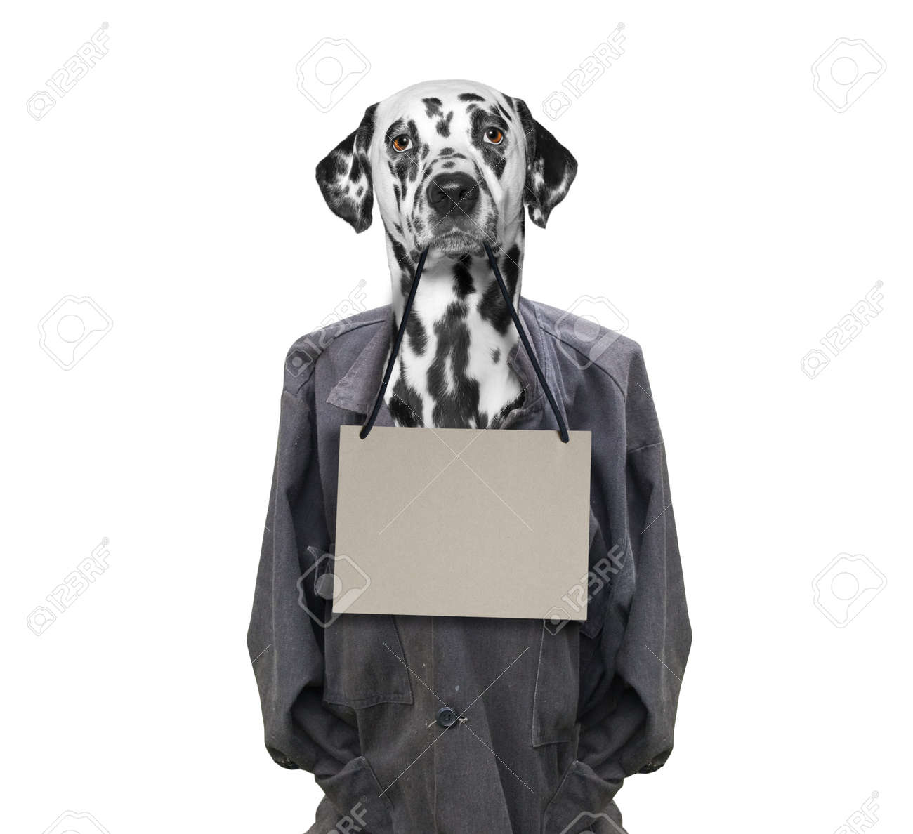 Tolle Hund Rahmen Zeitgenössisch - Bilderrahmen Ideen - szurop.info
