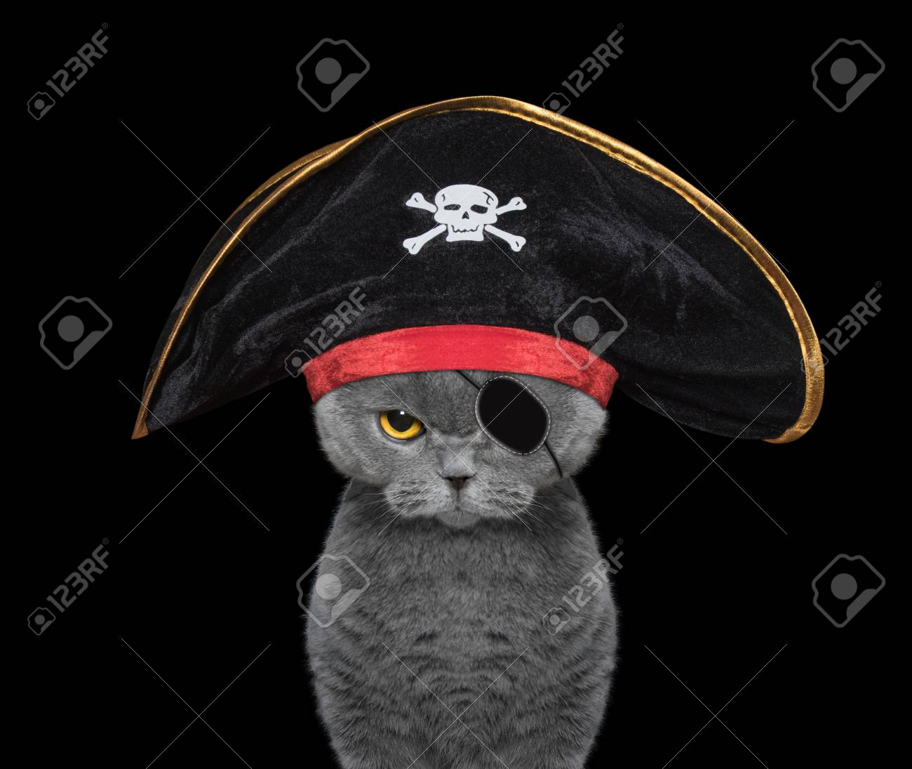 dace5c65167 cute cat in a pirate costume -- isolated on black Stock Photo - 63596630
