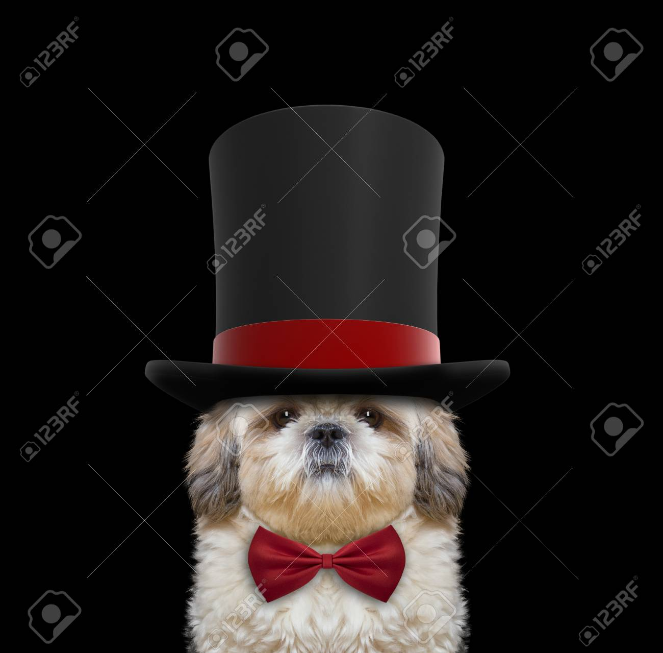 Best Necktie Bow Adorable Dog - 63596521-cute-dog-in-a-high-hat-cylinder-and-necktie-isolated-on-black  You Should Have_315882  .jpg