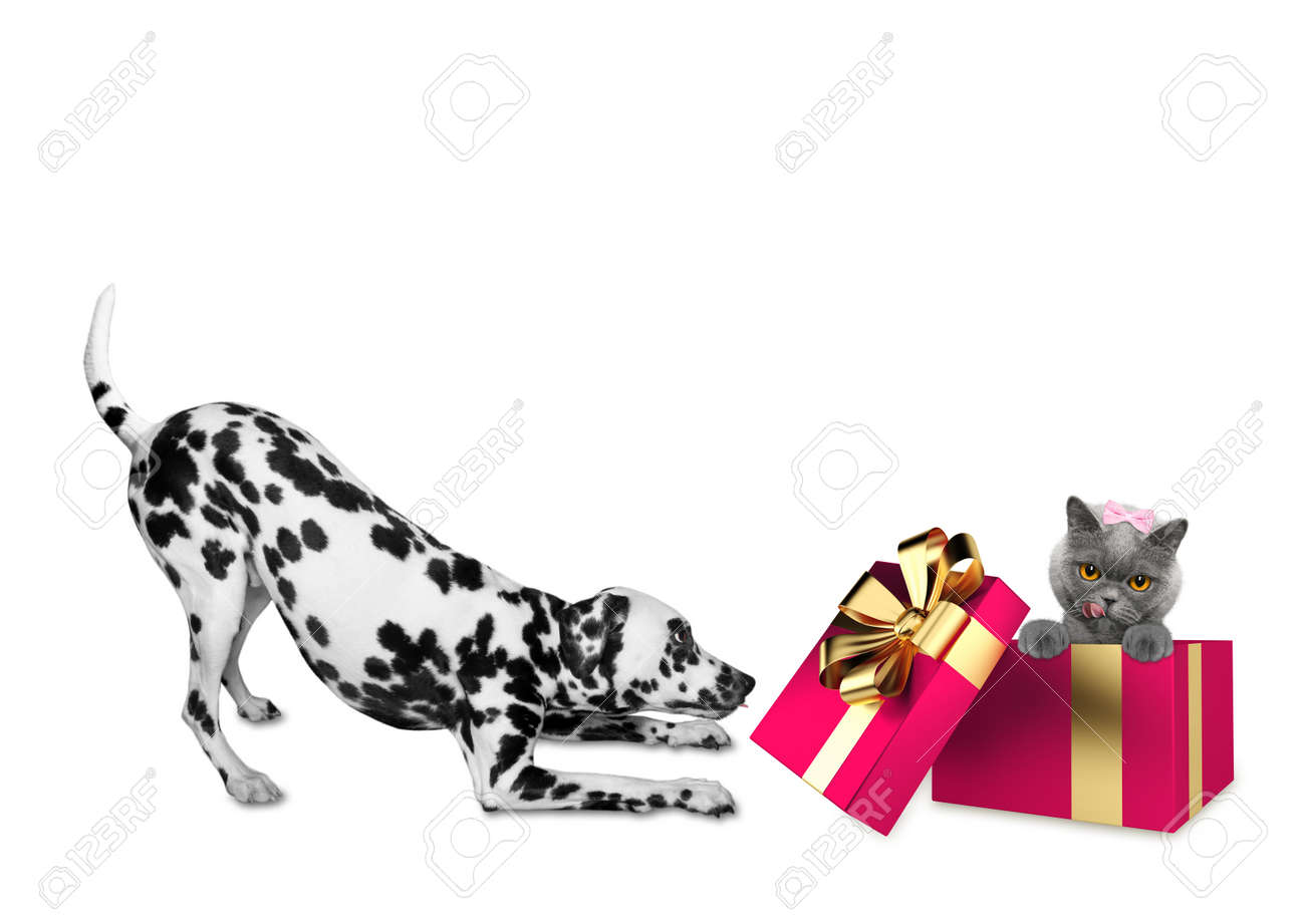 Cute Dalmatian Dog Standing Near His Birthday Gift Box With Cat Stock Photo