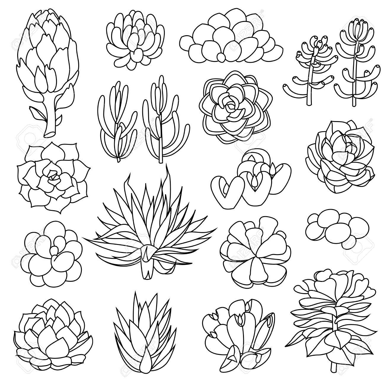 Set Of Succulents And Artichokes Leaves And Petals Isolated Royalty Free Cliparts Vectors And Stock Illustration Image 69821974