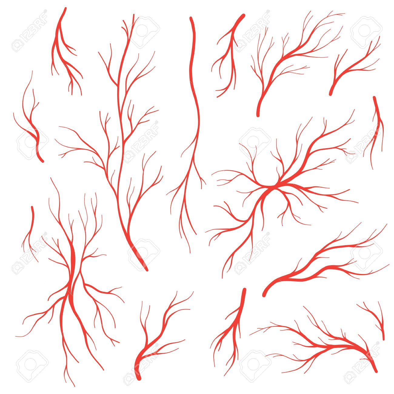 Human Eye Veins And Arteries Red Blood Vessels Blood System Vector
