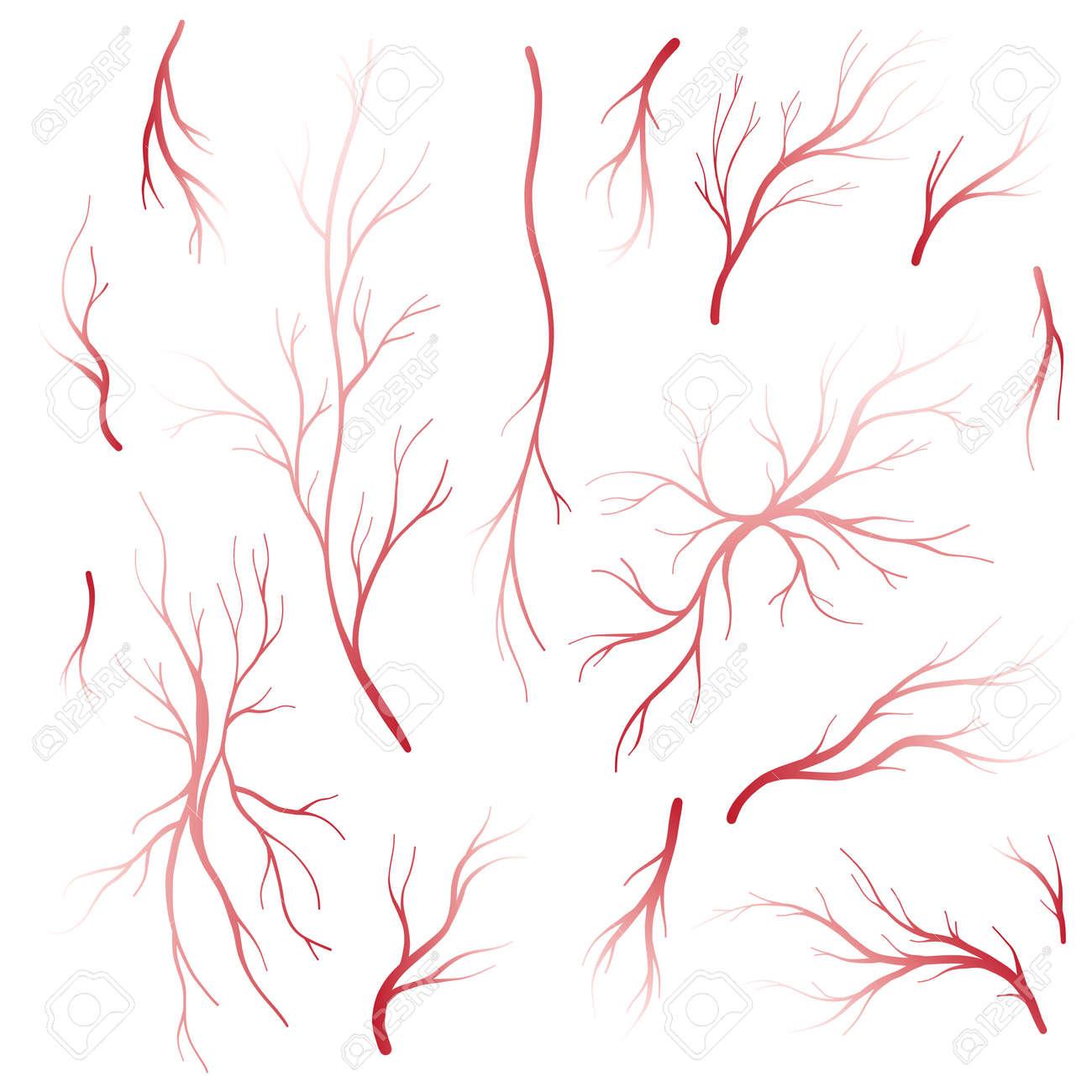 Menschliche Augenadern Und Arterien, Rote Blutgefäße. Blut-System ...