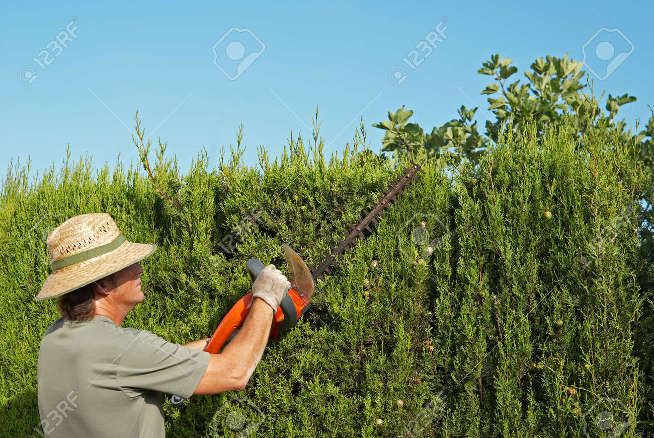 Gardener pruning a hedge with an electric pruner Stock Photo - 7494046