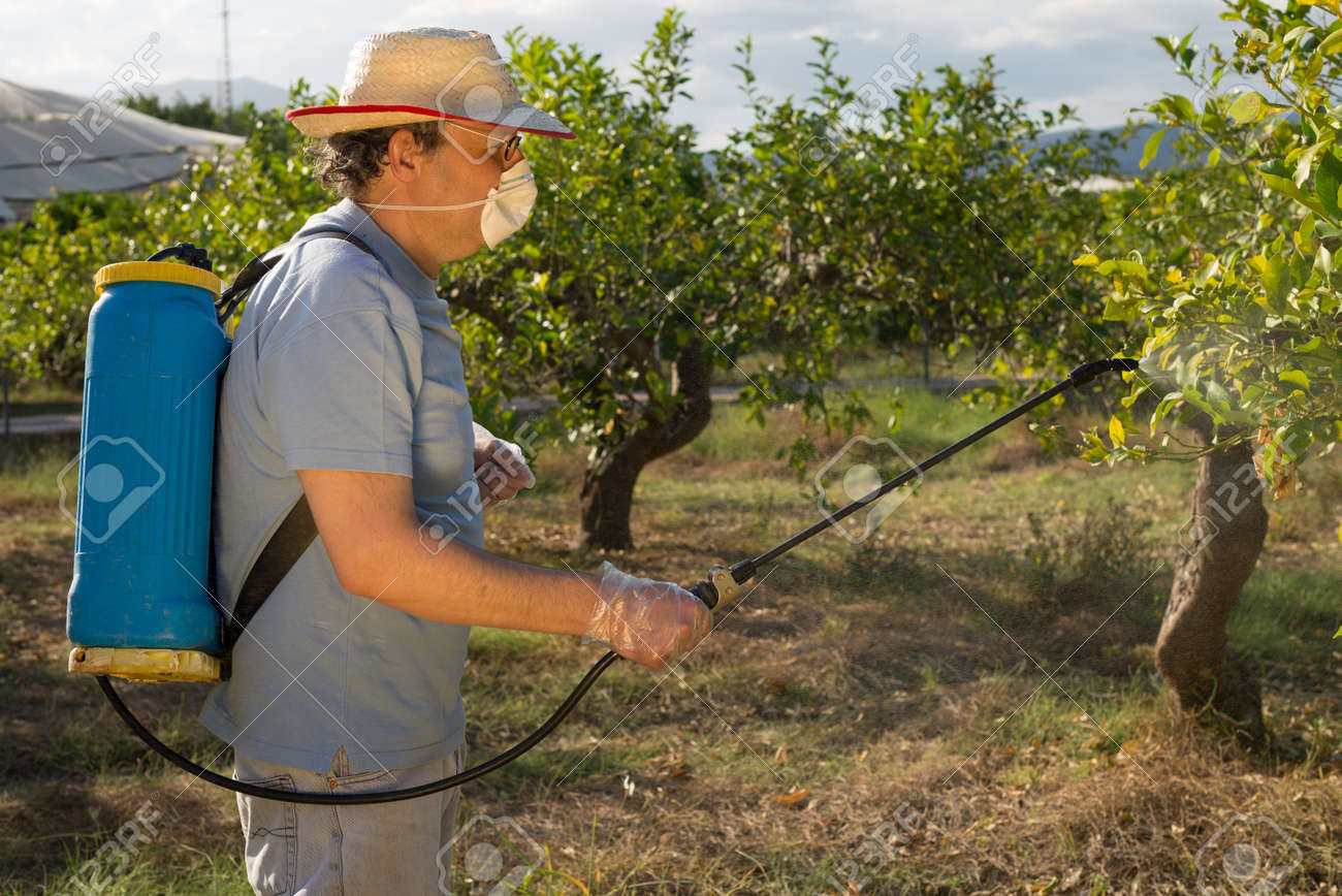 Fruit Tree Sprayers Part - 17: Agricultural Worker Spraying Pesticide On Fruit Trees Stock Photo - 20458999