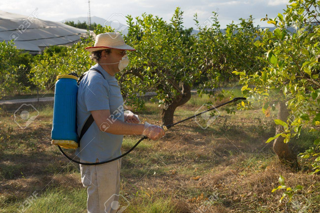 Beautiful Fruit Tree Sprayers Part - 12: Agricultural Worker Spraying Pesticide On Fruit Trees Stock Photo - 20952533