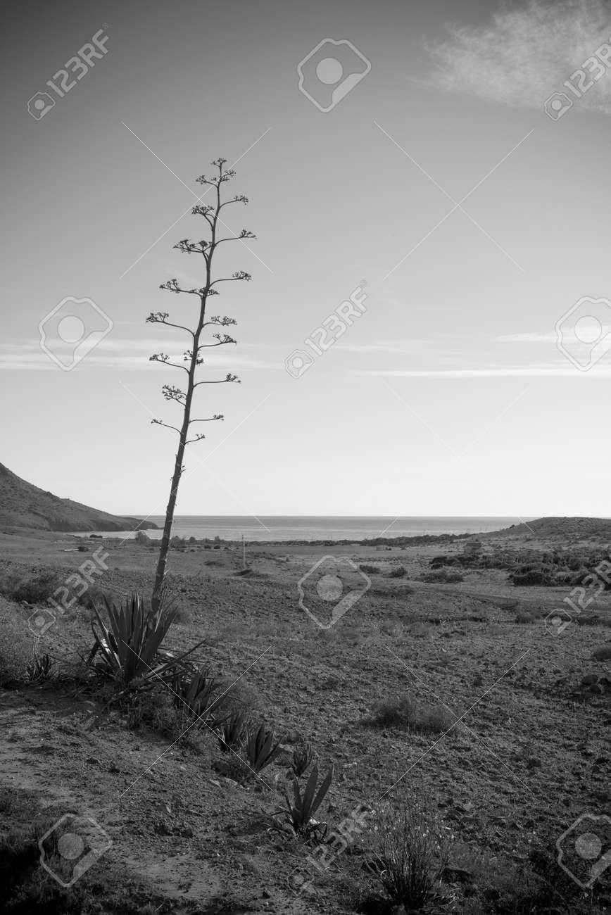 Paisaje Blanco Y Negro Del Parque Natural De Cabo De Gata Andalucía