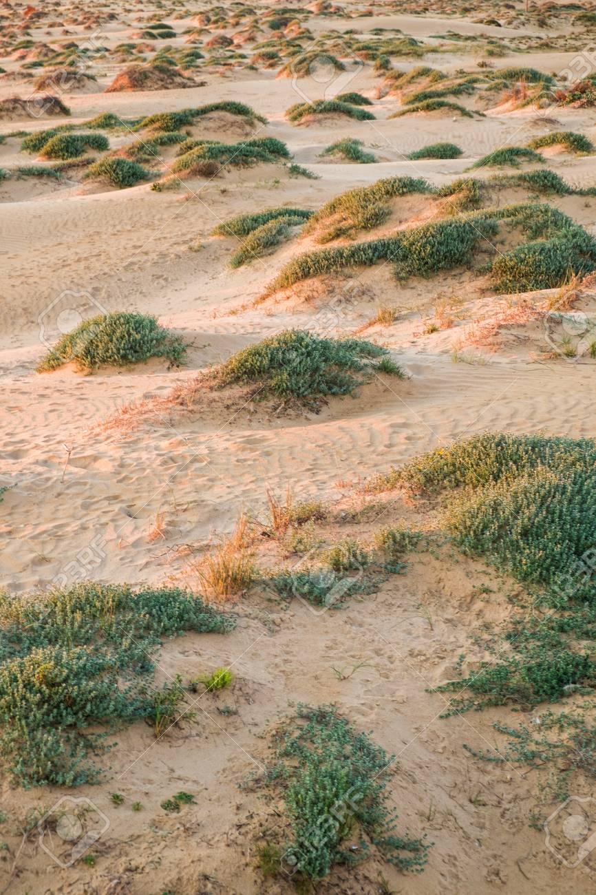 Toma Completa Del Marco De Dunas Costeras Fotos, Retratos, Imágenes ...