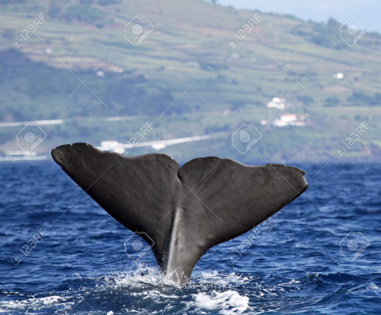 whale images u0026 stock pictures royalty free whale