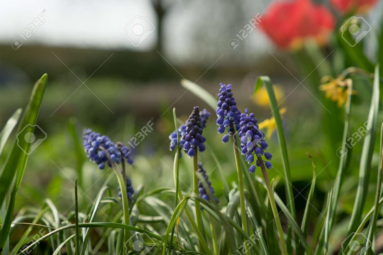 Frühlingsblumen In Den Niederlanden In Allen Farben Und Größen ...