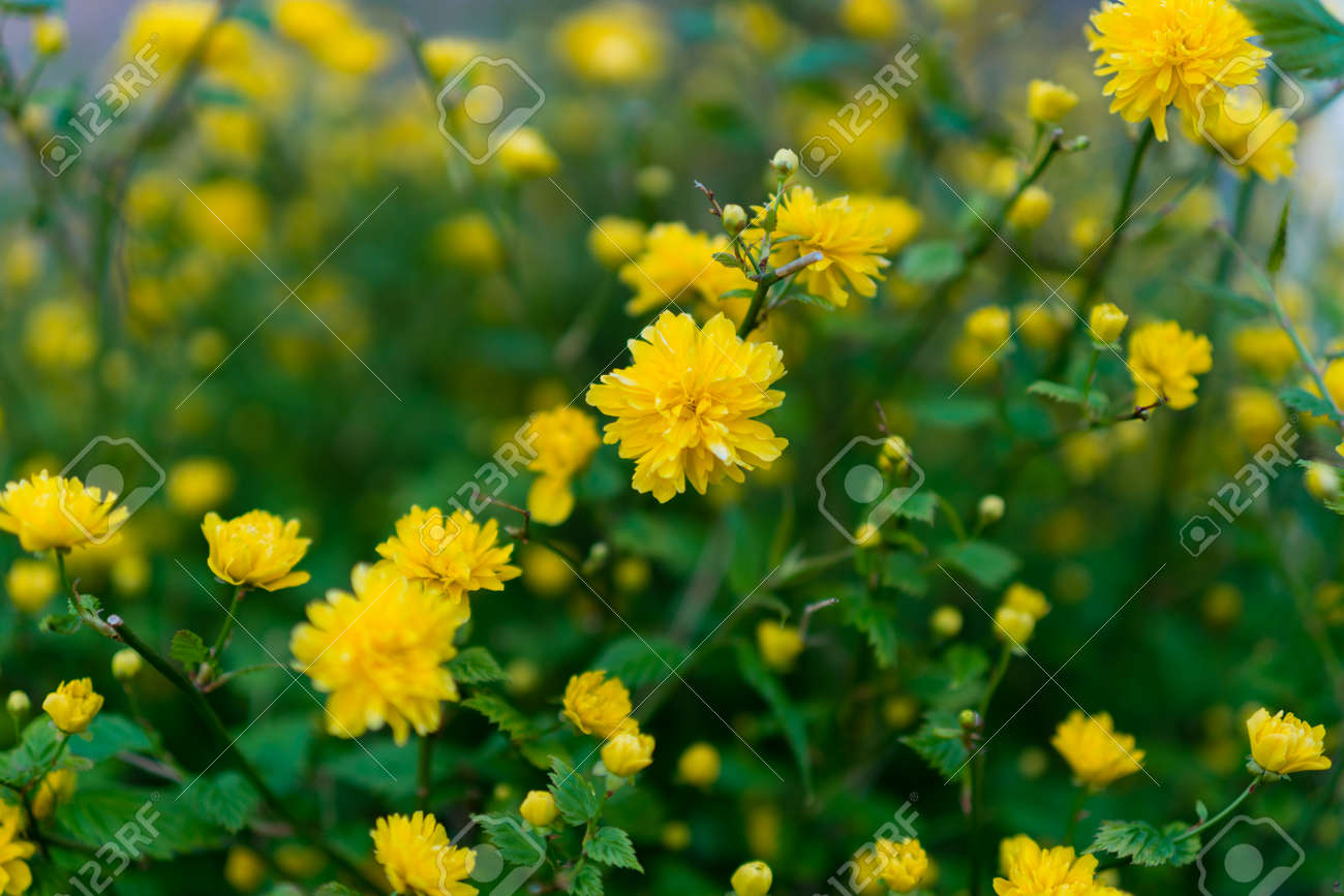 Wild spring flowers on a sunny day stock photo picture and royalty stock photo wild spring flowers on a sunny day mightylinksfo