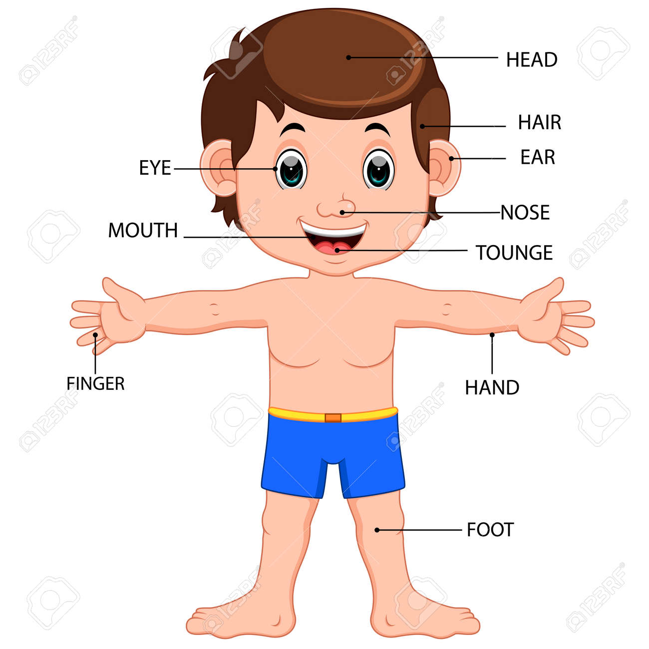 Boy Body Parts Diagram Poster Stock Photo, Picture And Royalty Free ...