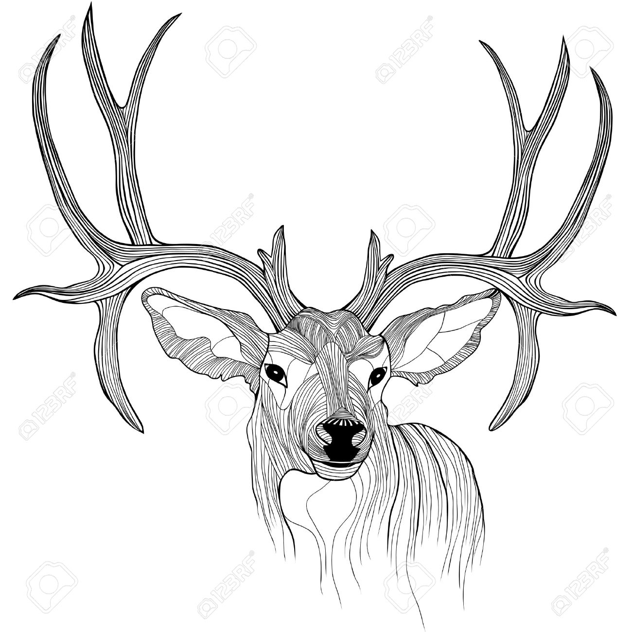 Deer Head Animal Illustration For T Shirt Sketch Tattoo Design