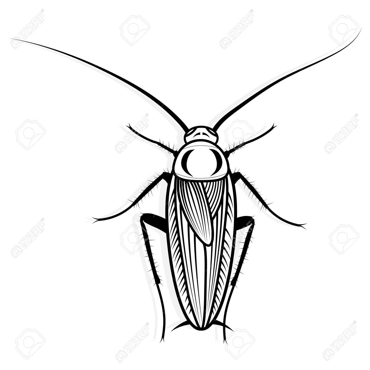 Foto de archivo - Ilustración animal del vector del diseño del vector de la  cucaracha para la camiseta. Boceto de diseño del tatuaje. 36a53ec16e25b