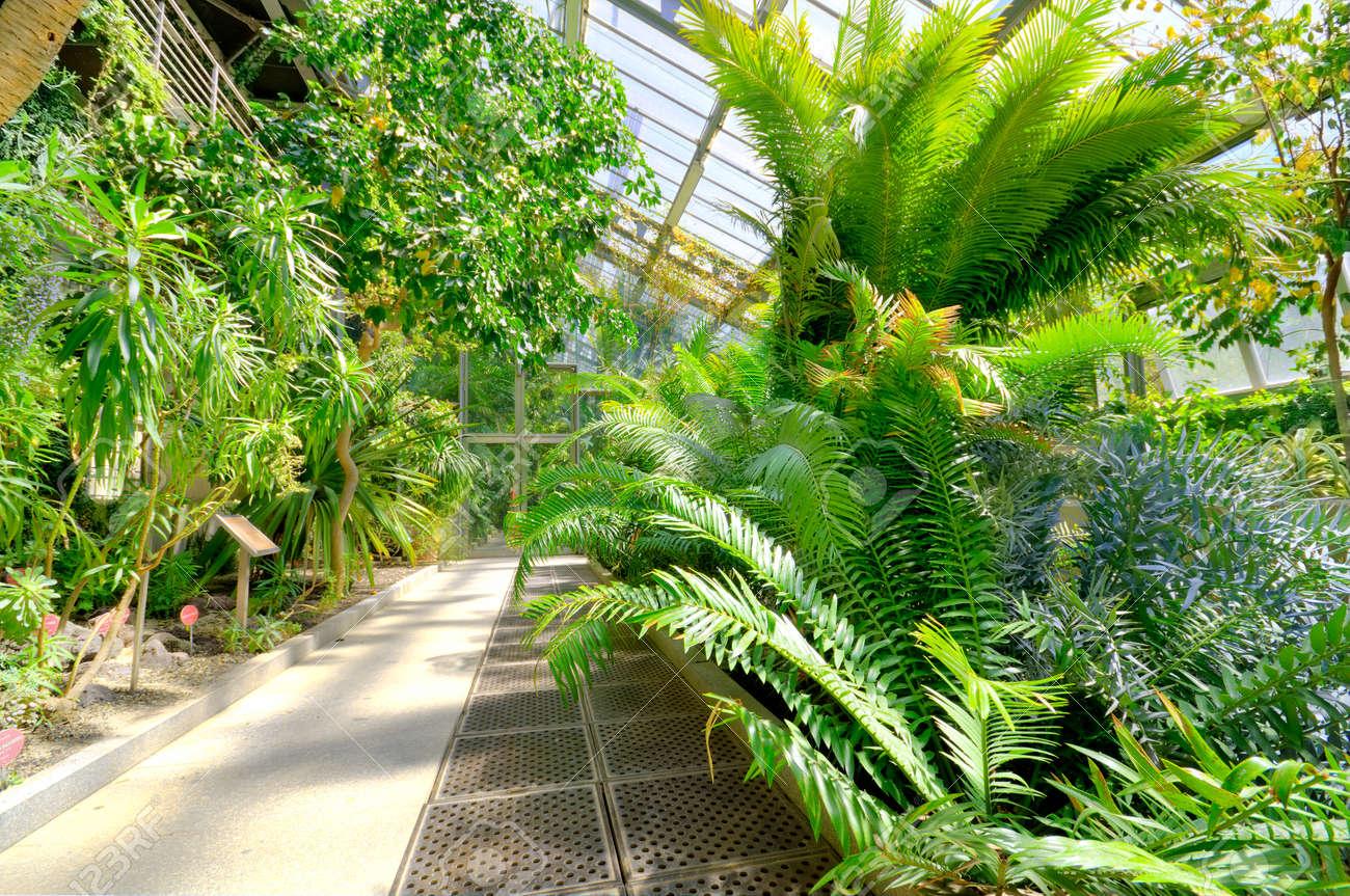 Awesome Tropische Pflanzen Im Garten Barsetkafo