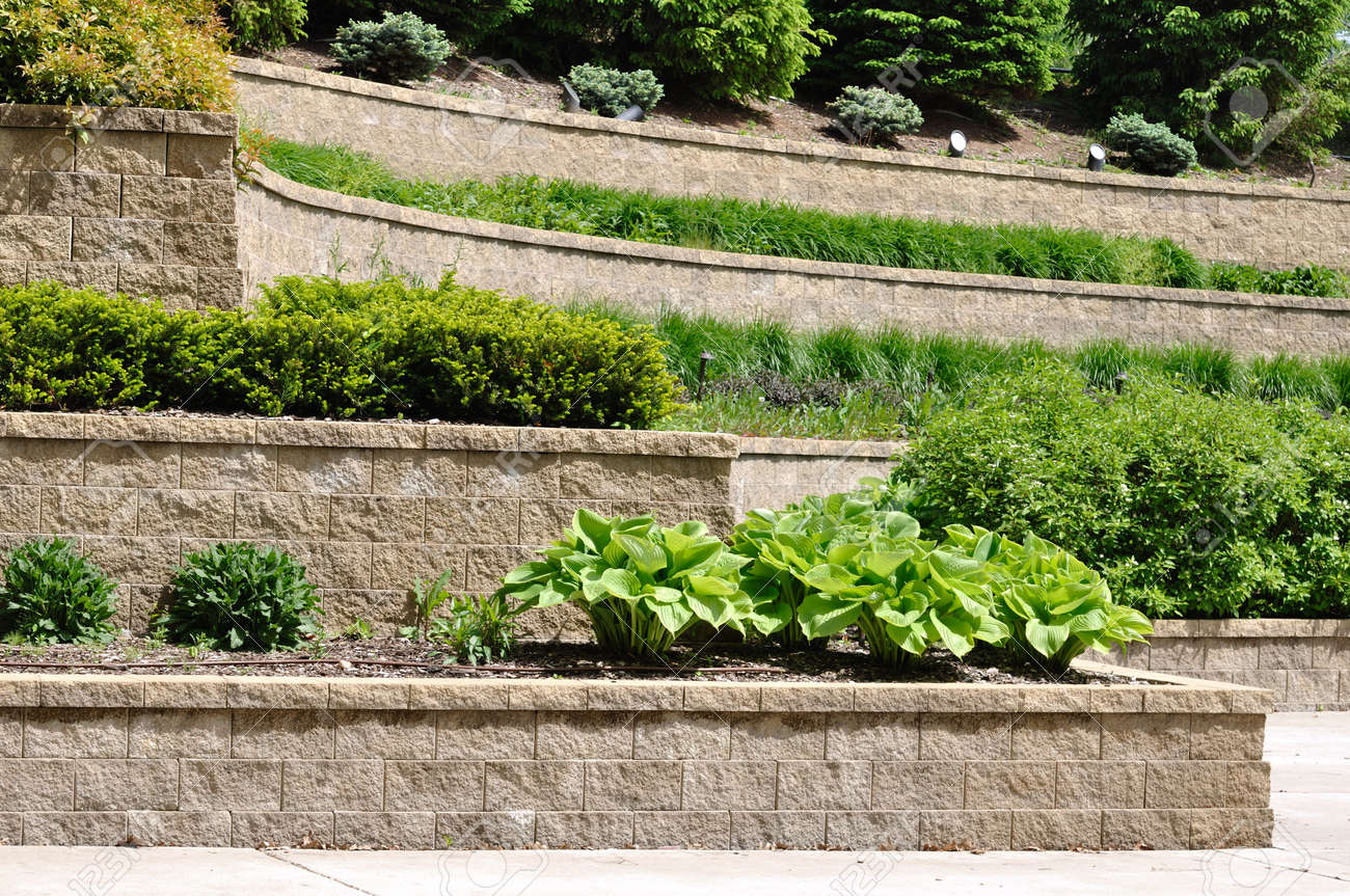 tiered retaining wall with hosta and shrubs stock photo picture