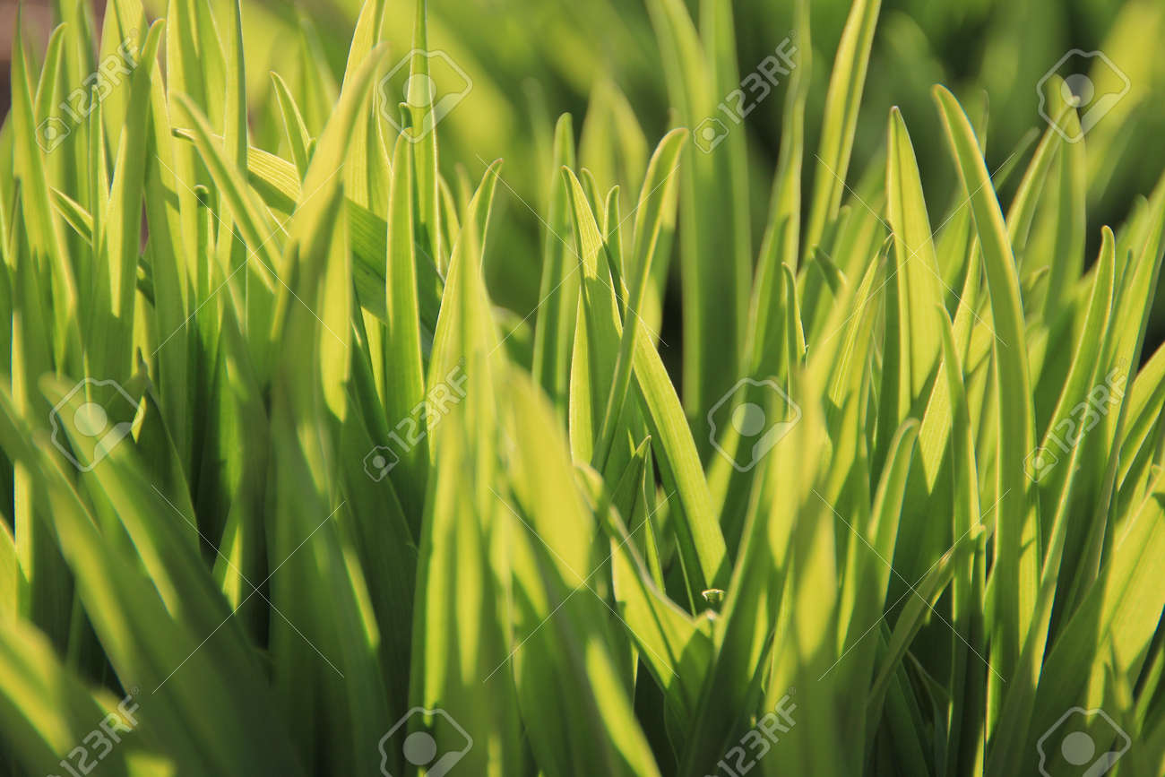 Fresh green grass closeup Stock Photo - 9570089