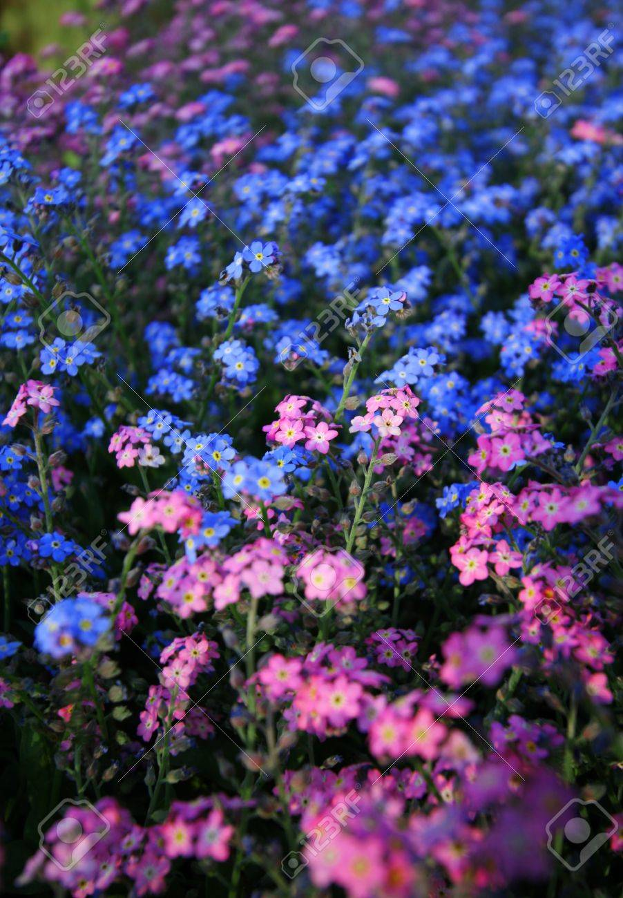 Bright colored blue and pink spring flowers in a garden stock bright colored blue and pink spring flowers in a garden stock photo 1379634 dhlflorist Choice Image