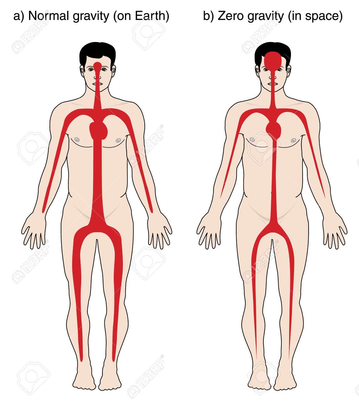 Zeichnung, Um Das Blut Für Ist In Dem Körper Auf Der Erde Mit ...