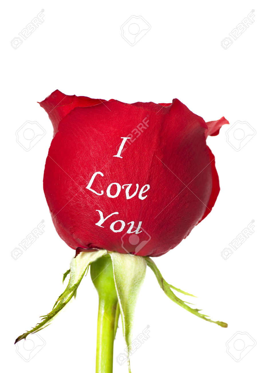 Fresh Red Rose With The Words I Love You Embossed On It On A ...