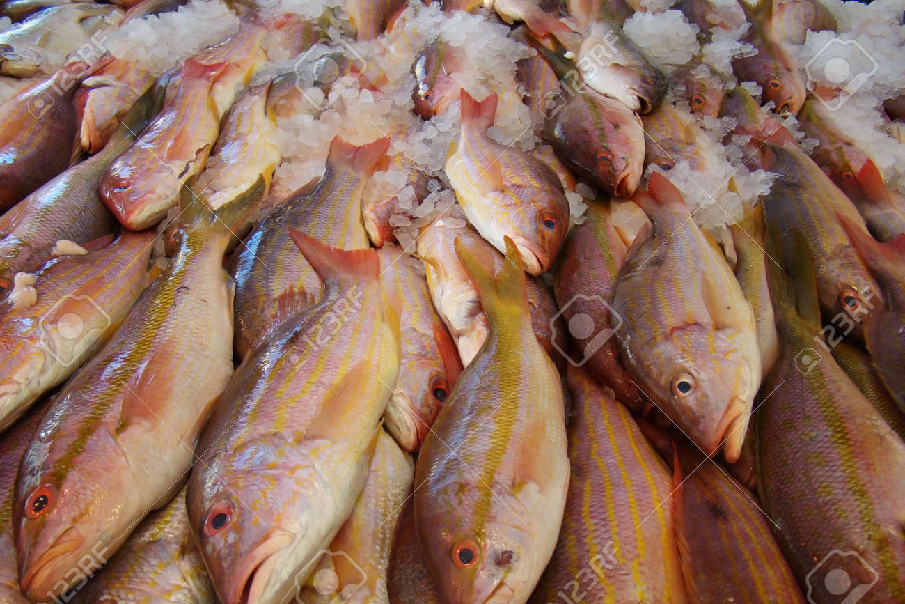 fresh fish on ice at a fish market Stock Photo - 9868053
